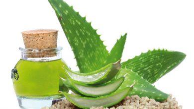Bild von Aloe Vera – eine wahrhaftig vielfältige Pflanze