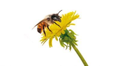 Photo of Die Heilungskräfte von Bienenprodukten