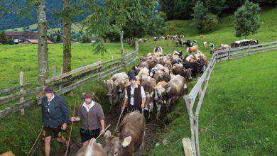 Photo of Die Pfrontar Viehscheid-Däg