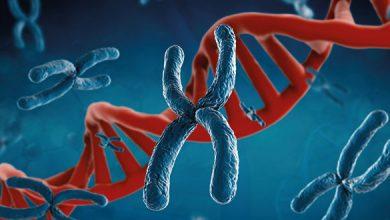 Photo of Der Mensch ist mehr als die Summe seiner Gene