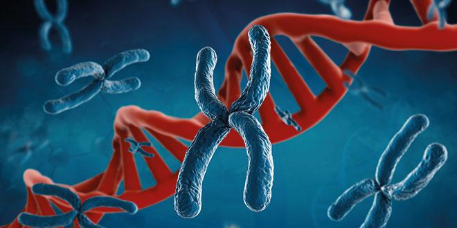 Der Mensch ist mehr als die Summe seiner Gene