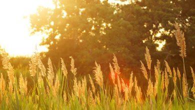 Photo of Der Sommer und die Sonne