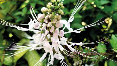 Photo of Pflanzen für die Blase