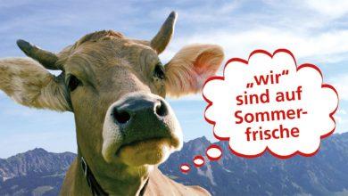 Photo of Richtiges Verhalten mit Kühen auf der Alm