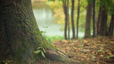 """Bild von Call for Entries für den NaturVision Kurzfilmwettbewerb """"Waldgeflüster"""""""